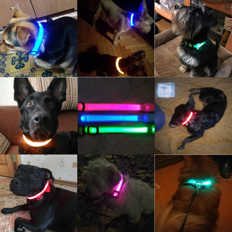 LED Nylon Safety Collar USB charging or battery for dogs