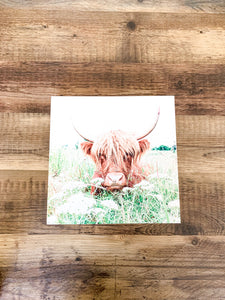 Highland Cow; Fluffy Cow Photo; Ruby; wood photo box