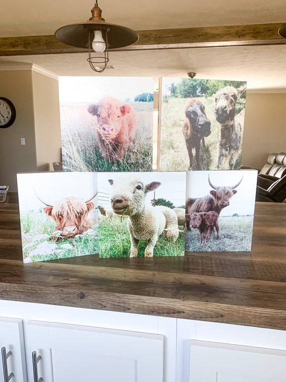 Farm Animal Photos on wood box bundle, donkey, cow sheep, fluffy,cute