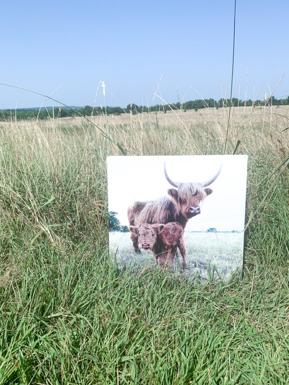 Highland Cow and calf, photo on wood box Fluffy Cow Photo; farm animals