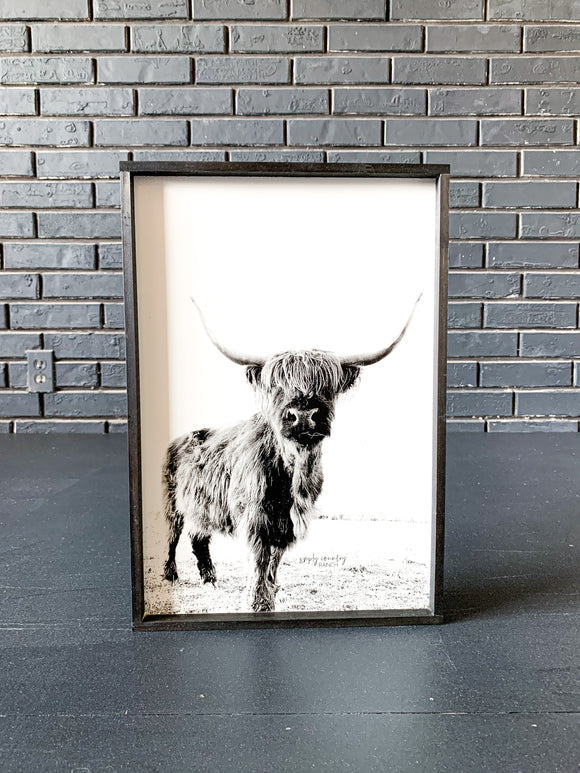 Darla Highland Cow Black and White fluffy cow horned cow