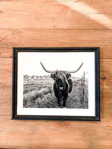 Scottish Highland Cow Black and White Portrait
