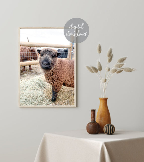 Babydoll Sheep; Smiling Sheep; Digital Print 7