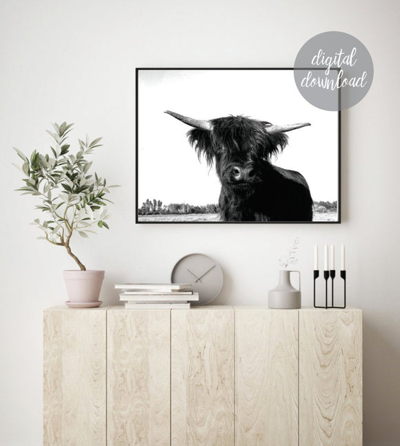 Highland Cow Print; Fluffy Cow Photo; Digital Download 5