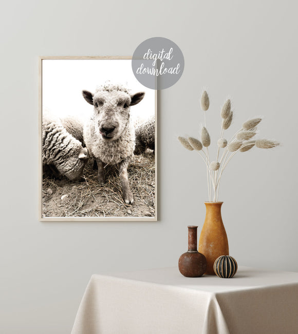 Babydoll Sheep; Smiling Sheep; Digital Print