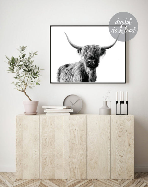Highland Cow Print; Fluffy Cow Photo; Digital Download 10