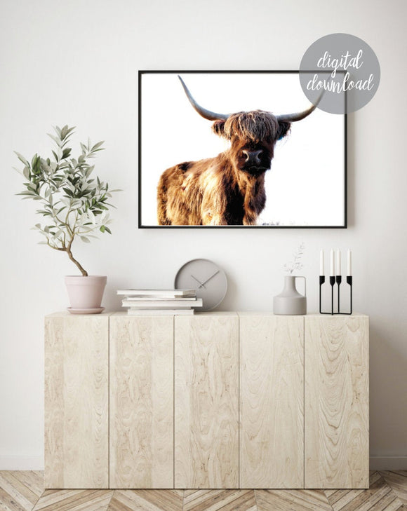 Highland Cow Print; Fluffy Cow Photo; Digital Download 9