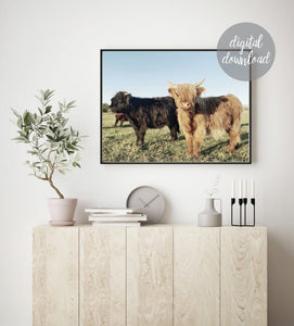 Highland Cow Print; Fluffy Cow Photo; Digital Download 8