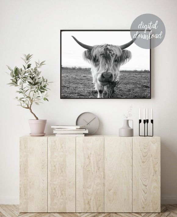 Highland Cow Print; Fluffy Cow Photo; Digital Download 6
