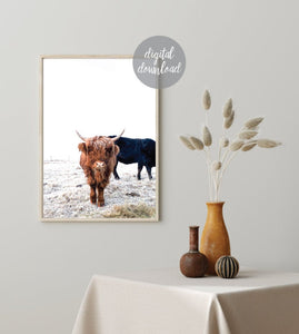 Highland Cow Print; Fluffy Cow Photo; Digital Download 2