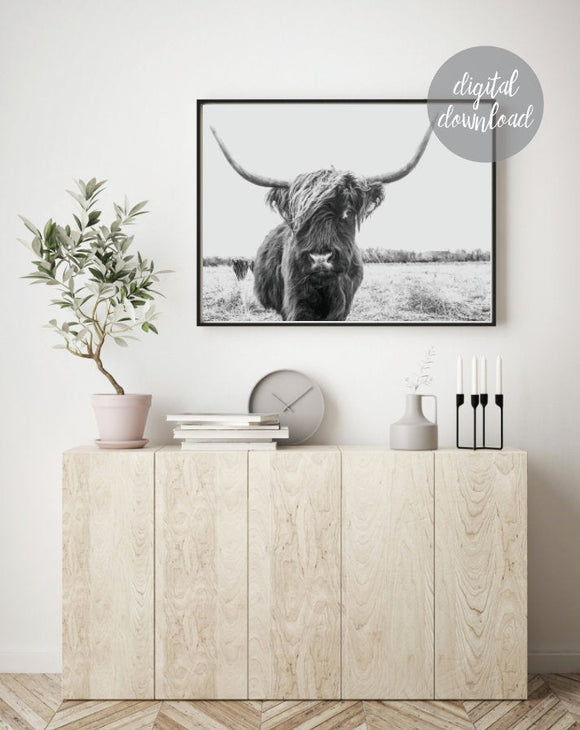 Highland Cow Print; Fluffy Cow Photo; Digital Download 1