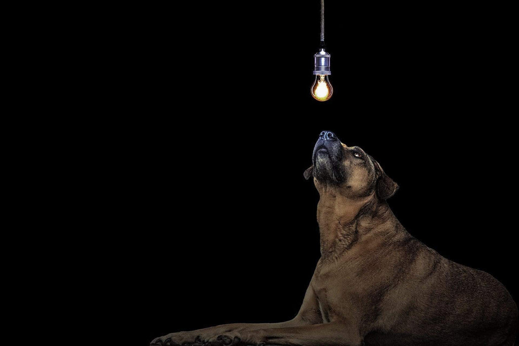 Outdoor Lighting – Keeping your Pets Safe