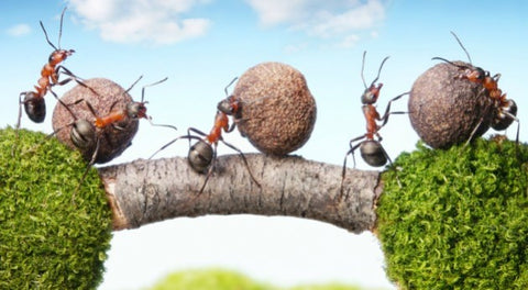 WHAT SHOULD WE KNOW ABOUT ANTS? PART I