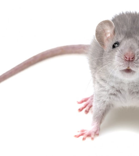MOUSE REPELLENT: HOW TO DRIVE THEM AWAY
