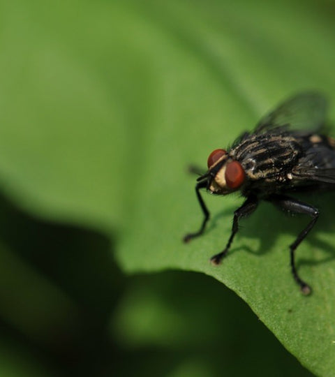MOST INSECTS INCREASE THEIR ACTIVITY DURING THE SUMMER
