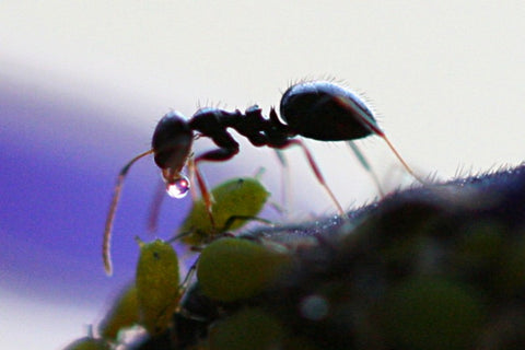 HOW WOULD BE YOUR LIFE IF YOU WERE AN ANT?