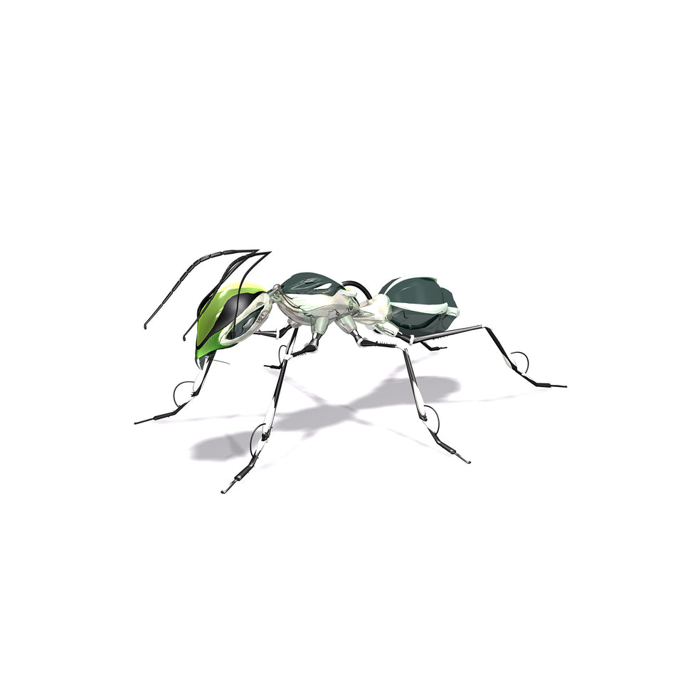 collections/radarcan-ant-hormiga-1920x1920.jpg