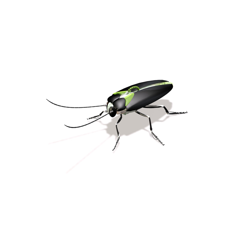 collections/radarcan-roach-cucaracha-1920x1920.jpg