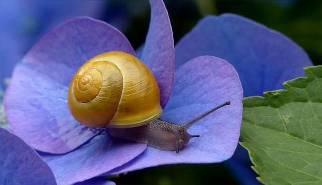 Snail Mucin benefits you need to know