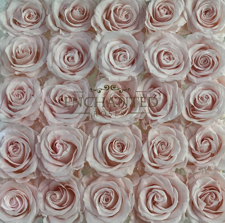Amore Collection - Sweet Pink Roses