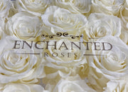 Amore Collection - White Roses