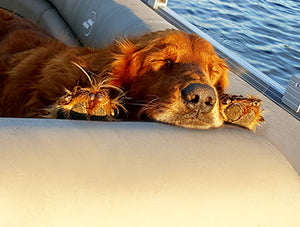 Raw Fed Dog on boat