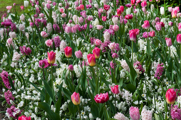 The top 4 flower bulb combinations