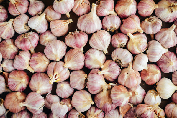 Garlic Growing Guide