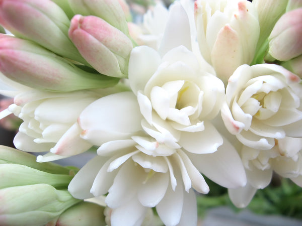 Tuberose Growing Guide