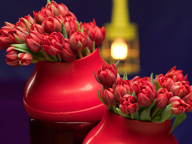 Red Princess Tulip