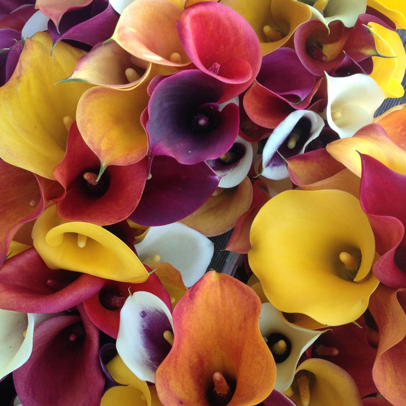 Calla Mixed