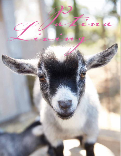 A New Website, A New Book, and a Couple of New Mini Goats!