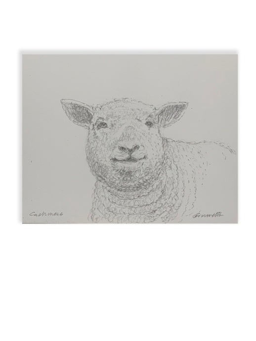 Animal Portraits By Steve Giannetti - Cashmere