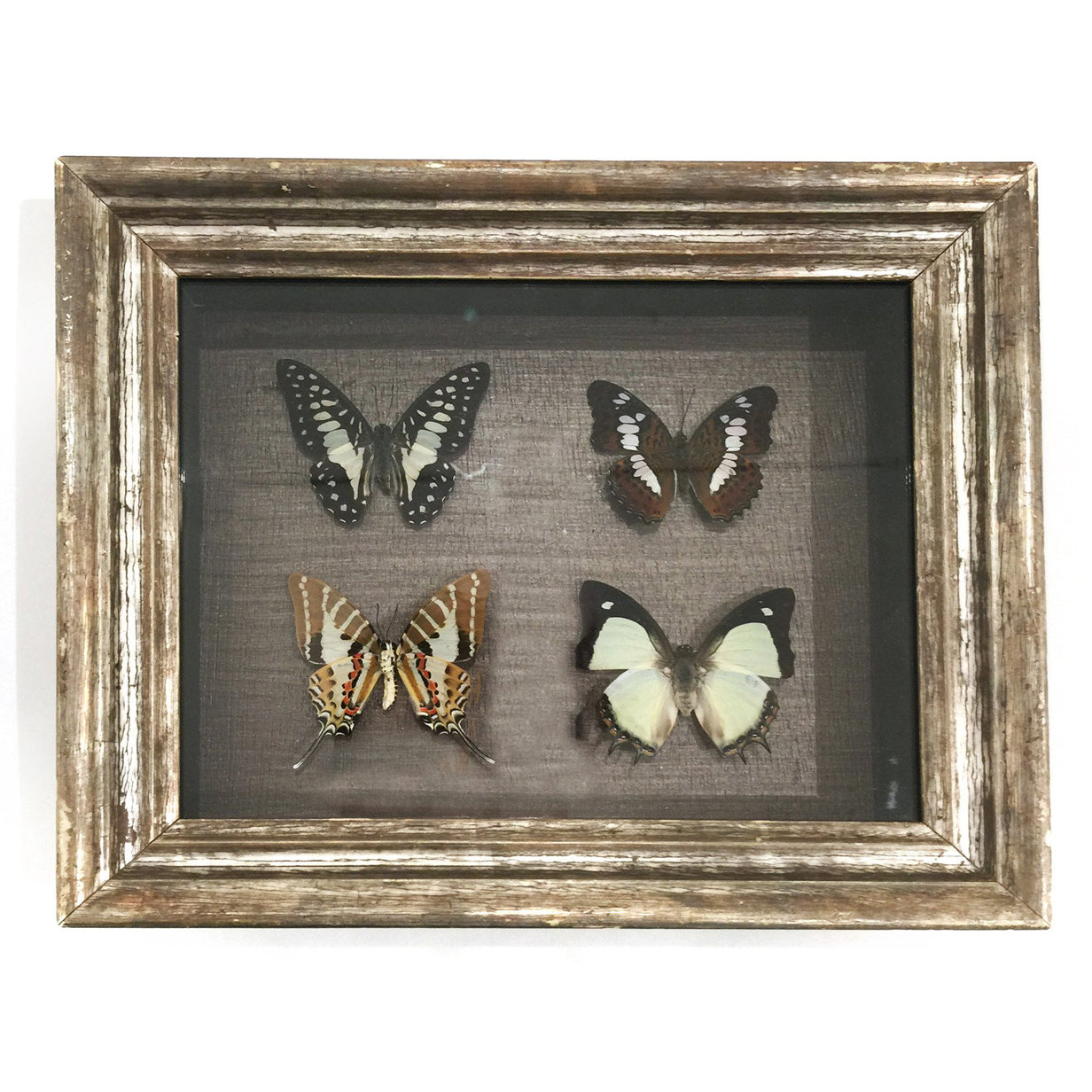FRAMED BUTTERFLIES