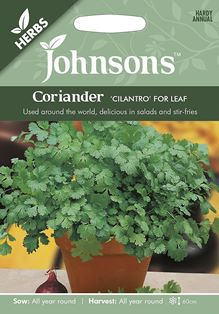 Coriander Cilantro for Leaf