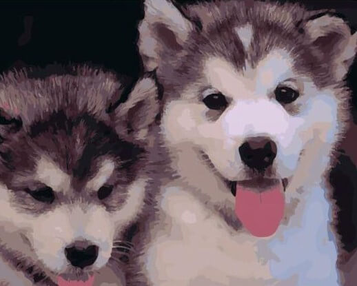 Pair of Siberian Huskies