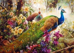 Peacocks in Forest