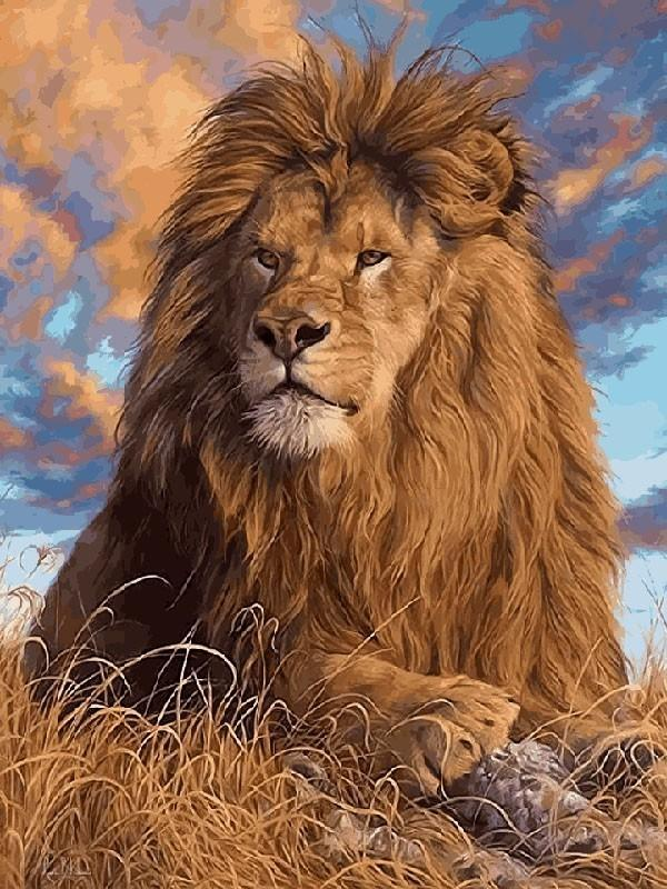 Lion Paint by numbers kit for Adults