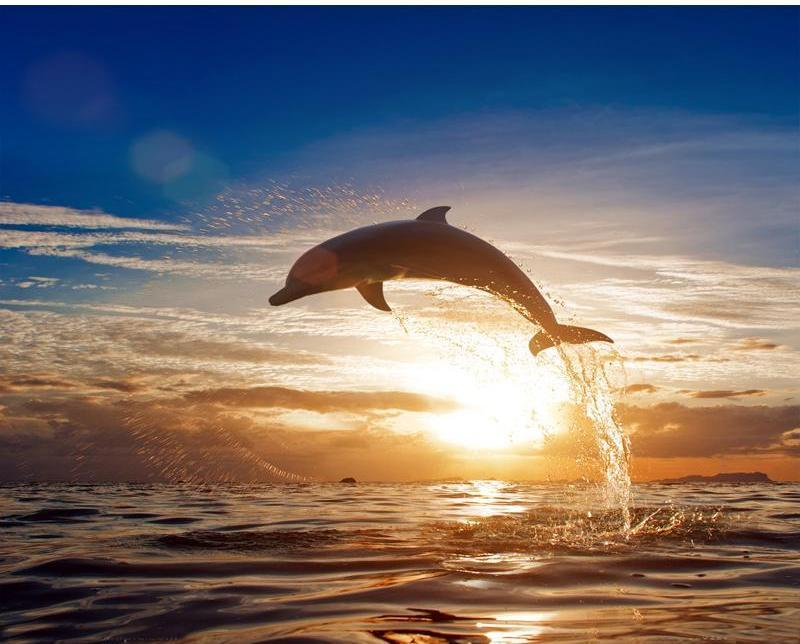 Jumping Dolphin in the Sunset Painting