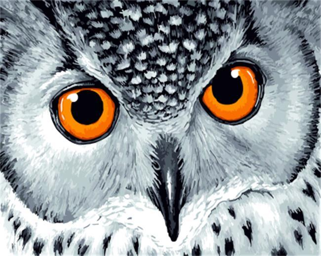 An Owl Staring with Yellow Eyes