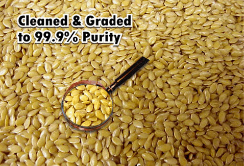 Flax seed cleaned and graded to 99% purity