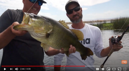 Top Tips For Catching Big Bass Using Spinnerbaits