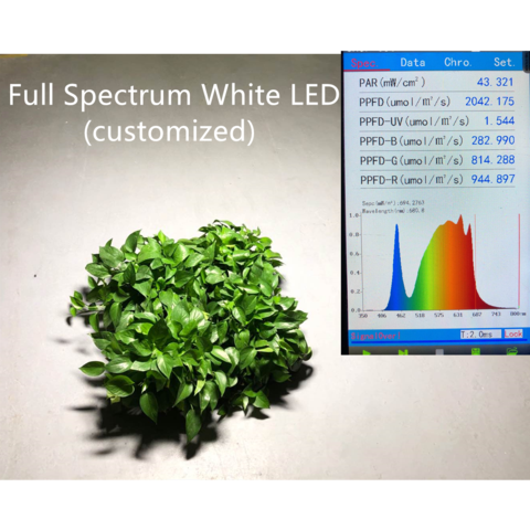 Which one is better? White Led Or Purple Led for Led Grow Lights?