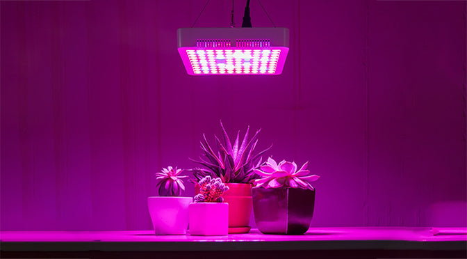 Growing Your Plants without Natural Sunlight