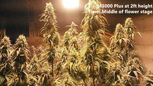 M series - 3000 Plus (White light available) (For pro grower)