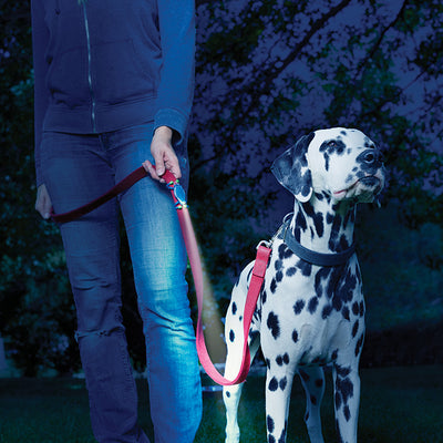 LeashLit LED Micro Flashlight for leash