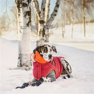 Scout Jacket for Dogs