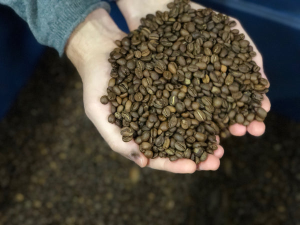 Roasted Coffee Beans | Wholesale Coffee Supplier