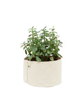 CANVAS PLANTER SET - NATURAL