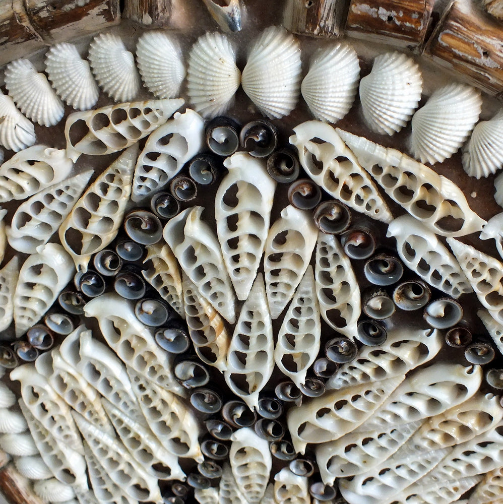 Shells from the beaches of Bali, Indonesia
